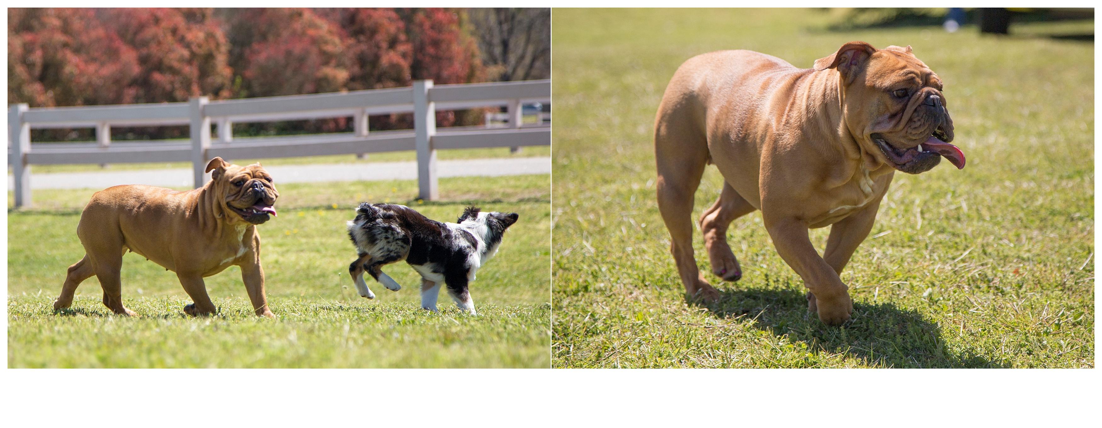 Puppy-Shoot_210 copy.jpg