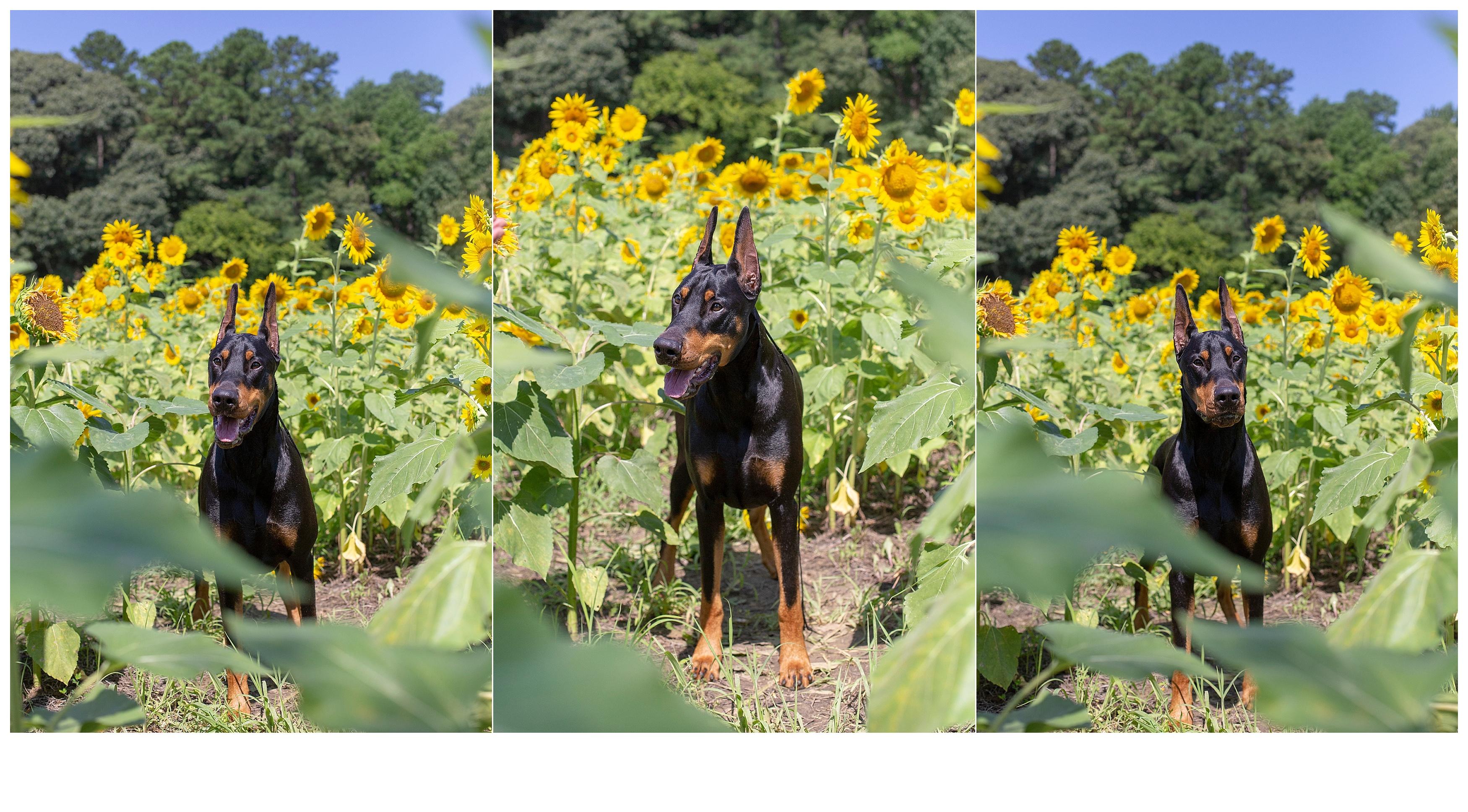 Vines_109.jpg